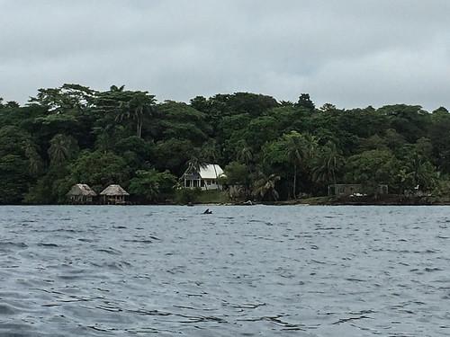 Bocas del Toro: une maman dauphin et son bébé !