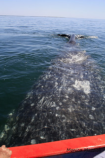 close encounter with the grey whale 2: partially under the launch