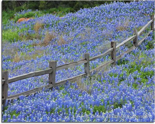 Can't Fence Them In by DMoutray - Denny Moutray Photography