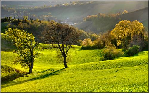 luce verde by Luigi Alesi