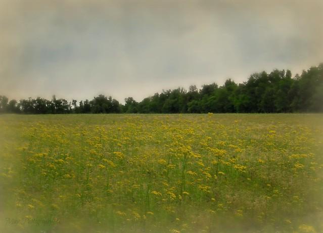 I Love Springtime ~♥~