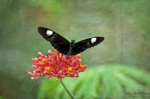 The Butterfly World