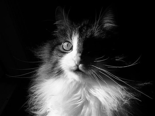 Captivated Cat ~ Shadows & Light by Chantal.PhotoPix