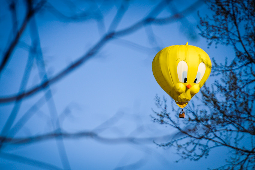 032512 010 tweety balloon