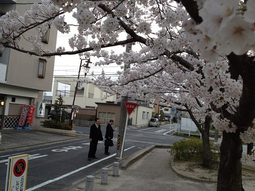 岩倉市の公園の桜 by haruhiko_iyota