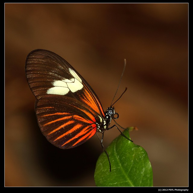 Unknown exotic butterfly