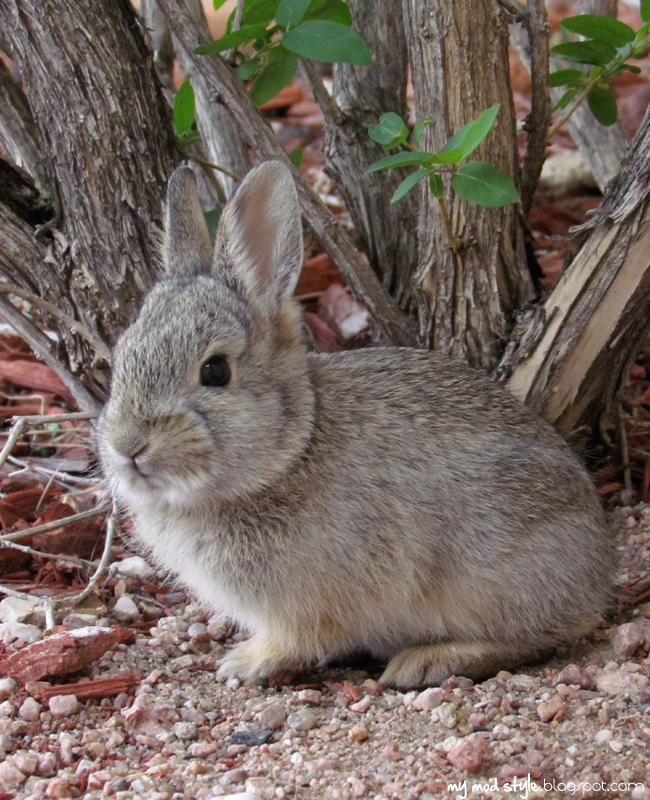 Baby Bunny2