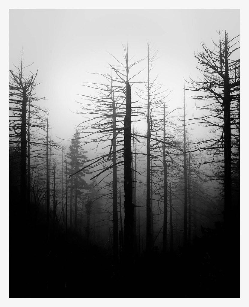 Limbo Trees 3