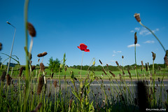England,bewdley, poppy farm