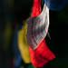 Tibetan flags in the wind by Bob Martin, Alaska