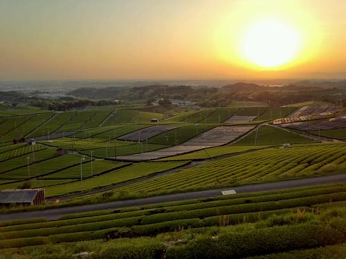 sunset green japan garden tea arrows fukuoka 夕日 緑 hdr fujitsu 福岡 新緑 新茶 茶園 yame 茶畑 八女 八女茶 f05d yamecentralteagarden 八女中央大茶園