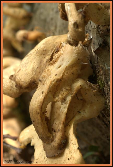 Mushroom Picture #1