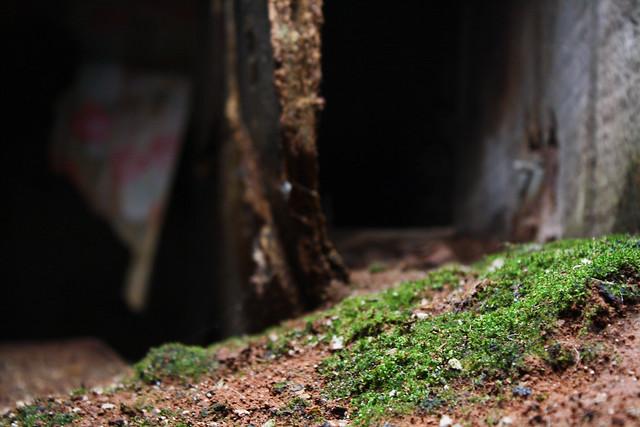 Moss, man.