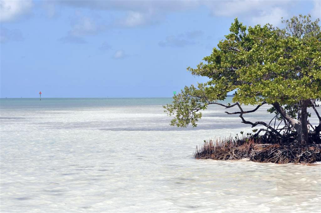 Cristalinas aguas que rodean la Overseas Higway 1 en nuestro camino hacia Key West florida keys, carretera al paraíso (mejor con un mustang) - 7214504474 7ce217b314 o - Florida Keys, carretera al paraíso (mejor con un Mustang)