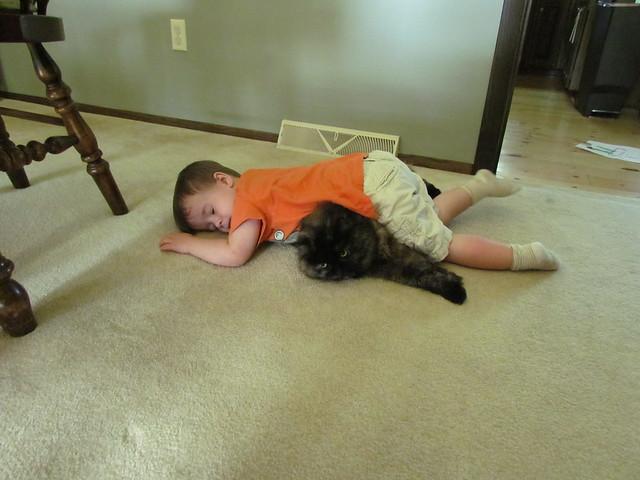 135 | 366 cat nap