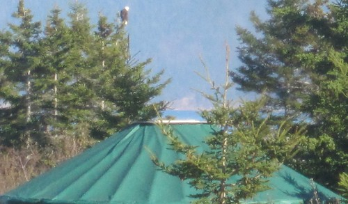Cape Breton Yurt at Cabot Shores