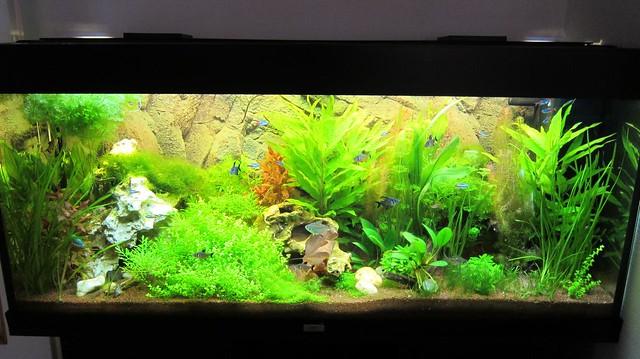 aquarium communautaire tropical eau douce flickr photo