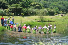 生態講師吳海獅老師帶領志工們小心翼翼踏入水中,眾人手牽著手避免滑倒(攝影:郭秉鋐)