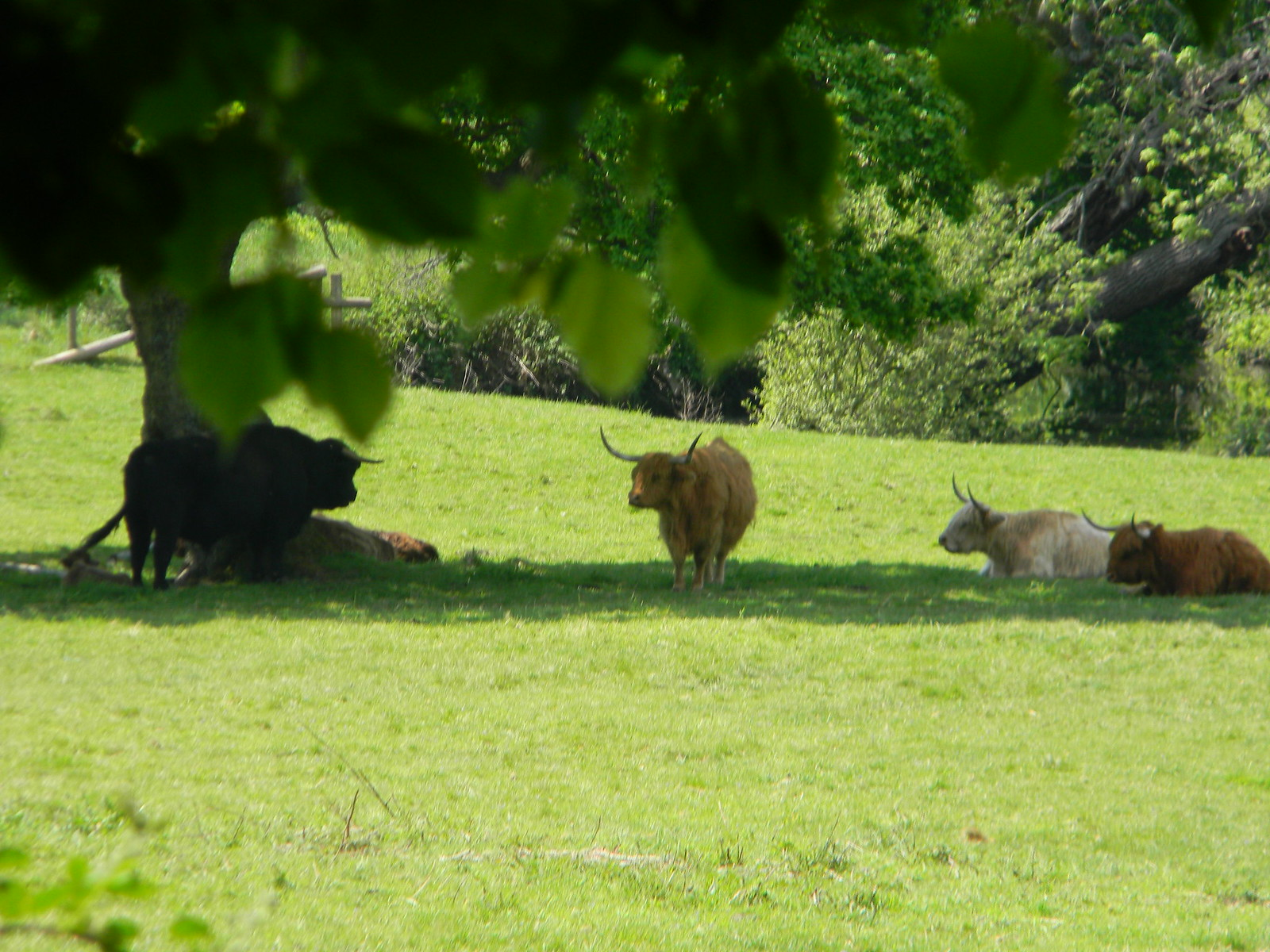 Longhorns Farnham Circular