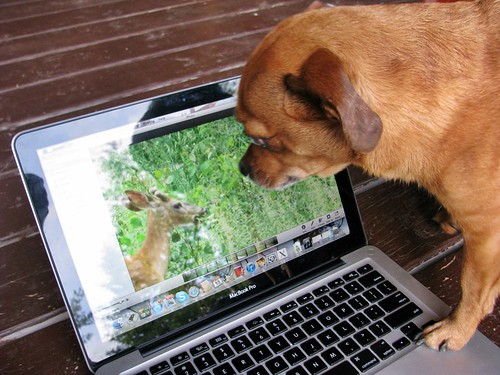 Grace + the deer in the laptop