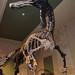 Kenosha Dinosaur Discovery Museum - Kenosha Wisconsin USA -  (7) by Aleksander & Milam