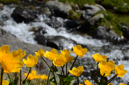 Flowers by a stream