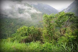 santuario-nacional-tabaconas-namballe-flora-bosques-romerrilo