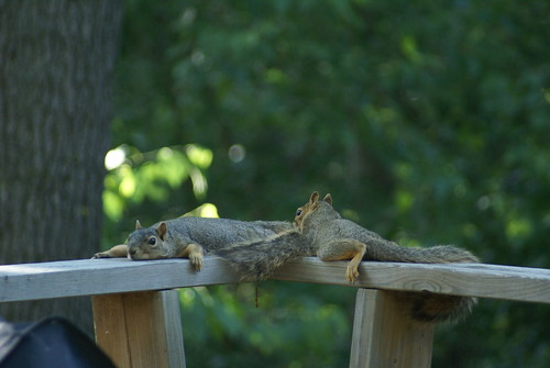 So hot out that these squirrels wont even chase each other