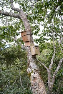 樹冠層上的鳥巢箱及蝙蝠巢箱。(攝影:傅國銘)