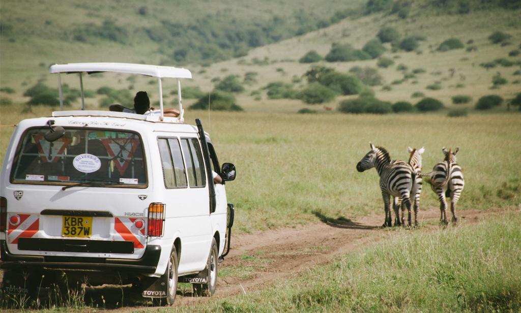 car-zebra