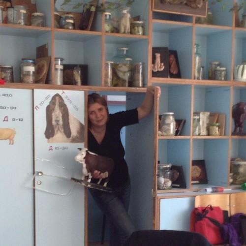 Картинки с выставки)) маленькая волшебная дверь в стене ветеринарного кабинета))) тут находилась судейская))) #калуга  #выставкикошек