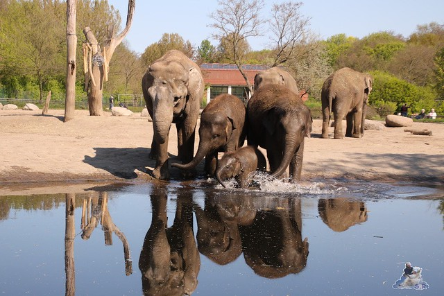 Tierpark Berlin 05.05.2016  0163