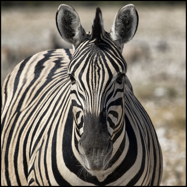 _SG_2016_05_Namibia_0004_IMG_0782