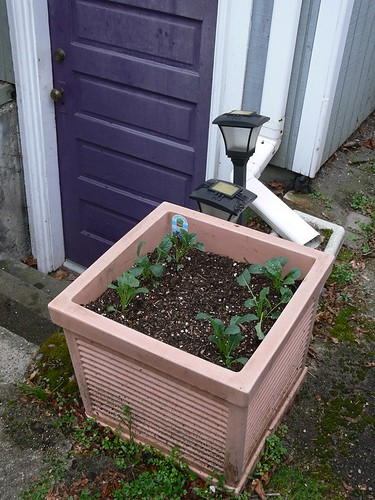 Jenny: Garden Update