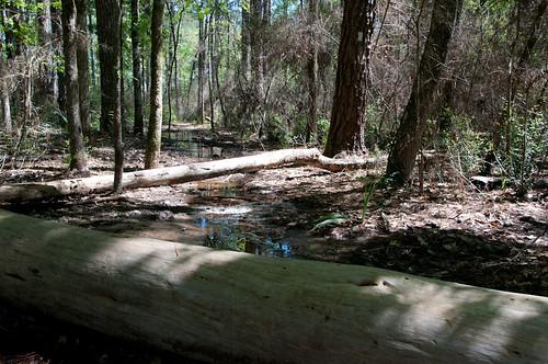 usa texas trail montgomery samhoustonnationalforest th5 lonestarhikingtrail blkbrn