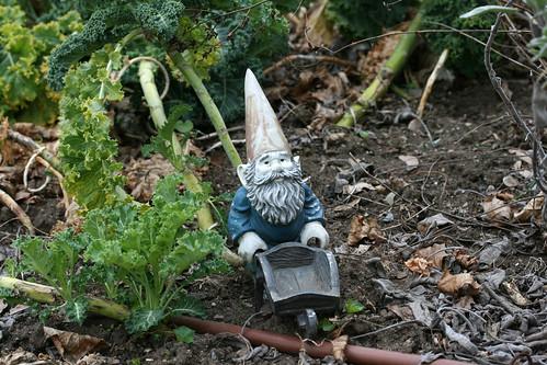 gnome 028