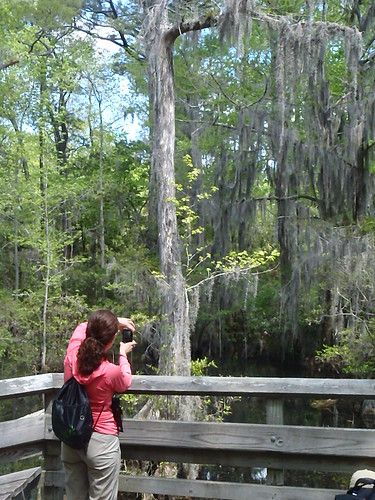 Admire Bald Cypress and beaches at First Landing