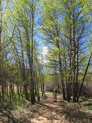 Aspen Grove on the Path