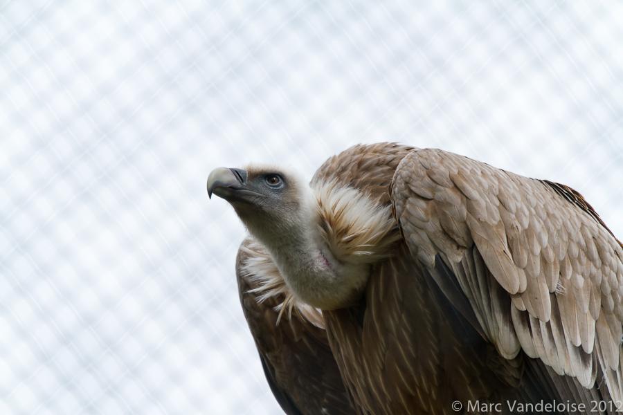 Sortie au Zoo D'amnéville le 05 Mai 2012 : Les photos 7148972357_92304e2512_o