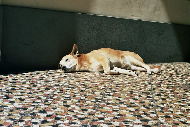 milan, italy, trip, travel, fun, city, streets, emotions, feelings, short stay, 35mm film, Fujifilm 400, chiiling dog, rest, sun, sunlight, summertime, spring, lying