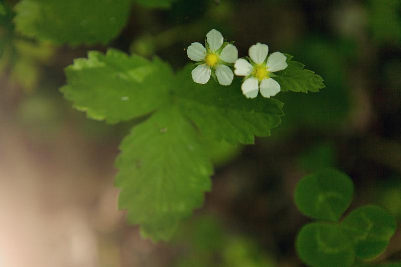 Природа, цветы