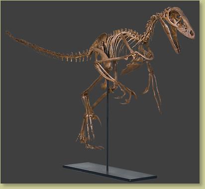 julieraptor