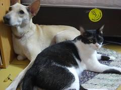 為偏鄉犬貓絕育,屏東縣政府十分支持。(攝影:林憶珊)