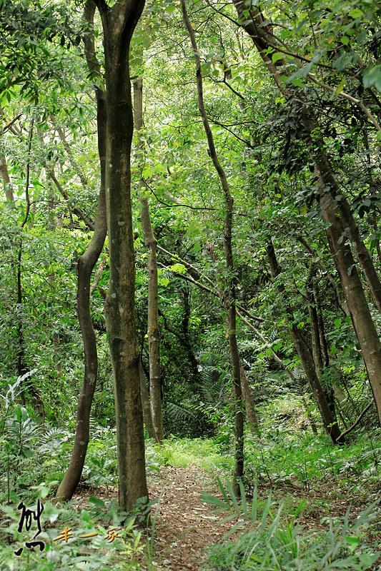 鳥瞰桃園盆地景點|五十份山登山步道