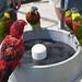 Water Cooler by asrai