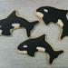 Orca Cookies - <span>www.cupcakebite.com</span>