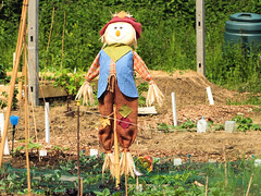 child(0.0), farm(0.0), flower(0.0), garden(0.0), agriculture(1.0), scarecrow(1.0), rural area(1.0),
