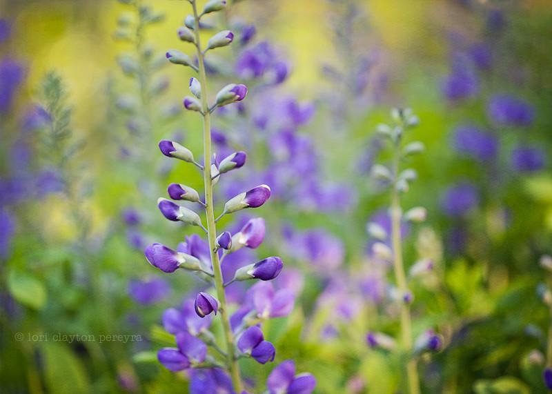purplegarden-13