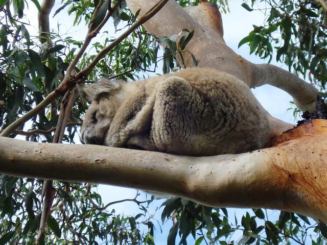 Cape Otway - Great Ocean Road, Australia 099