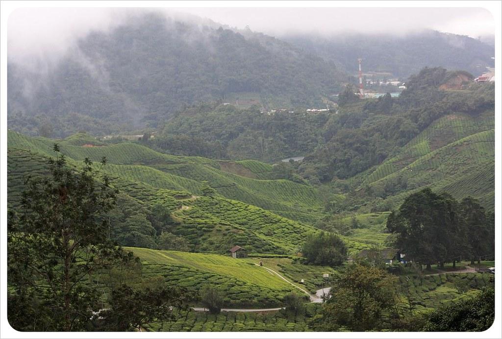 boh tea plantation cameron highlands